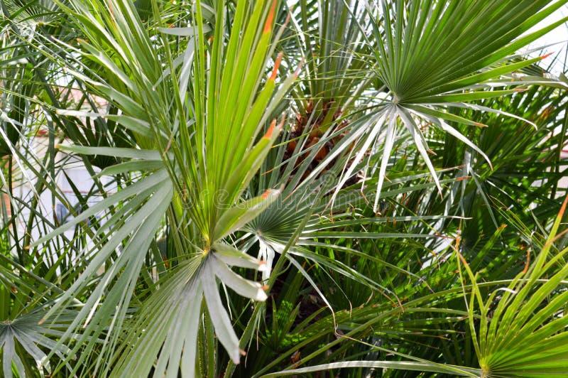Textuur groene pluizige natuurlijke installatie met langwerpige bladeren zoals naalden onder het zonlicht, exotische ongebruikeli stock afbeeldingen