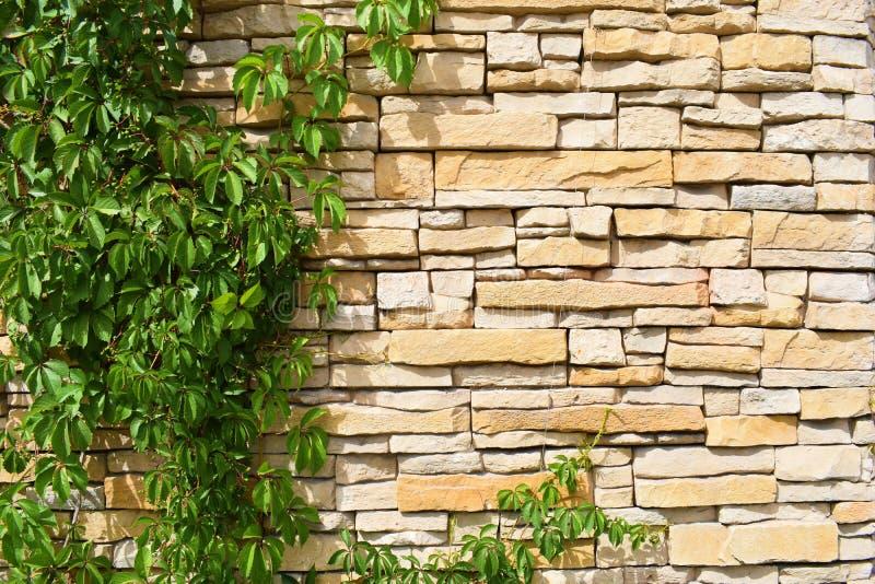 Textuur met bruine bakstenen muur en groene loach op de linkerzijde stock afbeeldingen