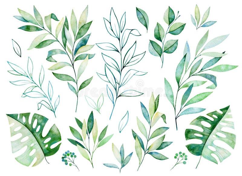 Textuur met greens, tak, bladeren, tropische bladeren royalty-vrije illustratie
