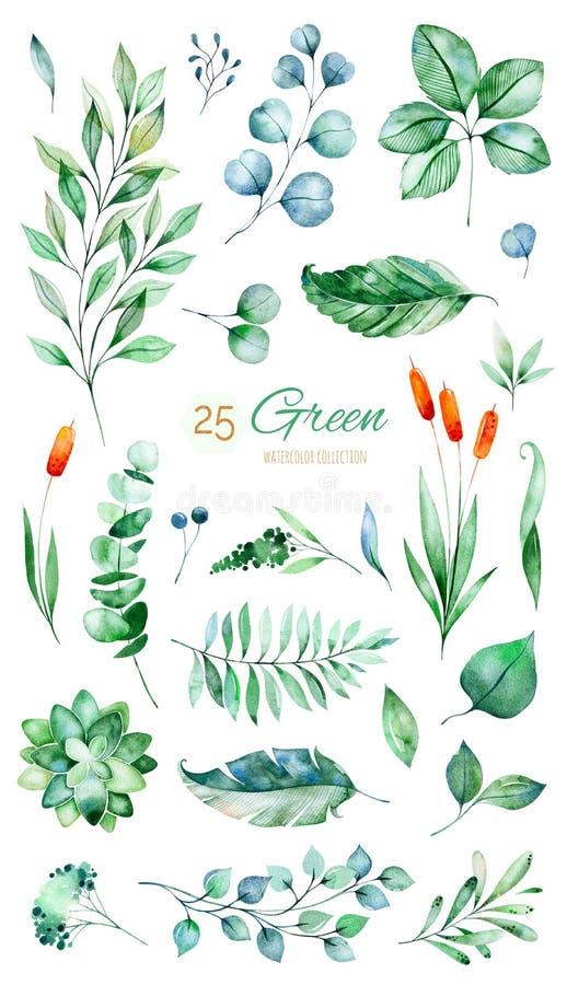 Textuur met groene, succulente, bladeren, tropische bladeren, gebladerte vector illustratie
