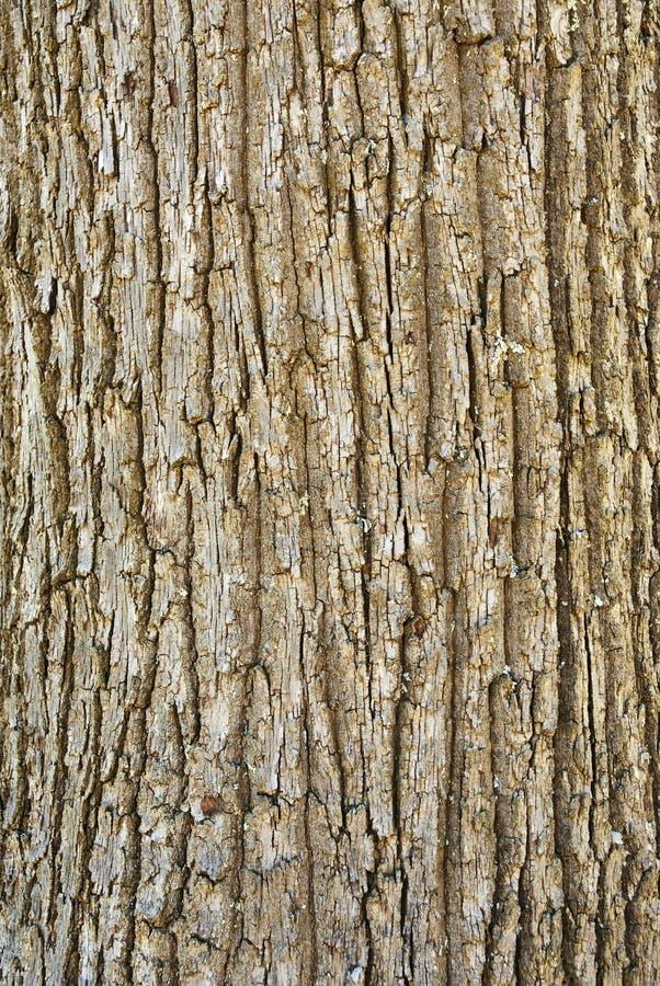 Textuur van boomschors stock foto's