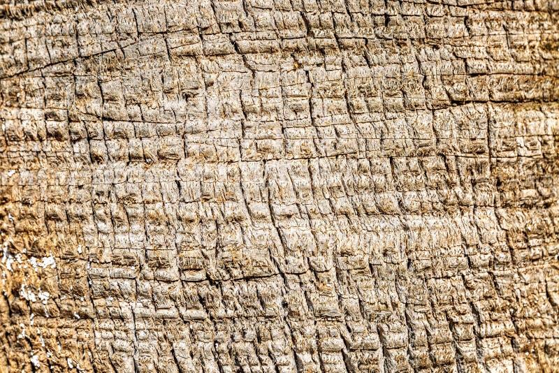 Textuur van boomschors Ongebruikelijke tekening Close-up, Achtergrond Ruimte voor tekst royalty-vrije stock fotografie