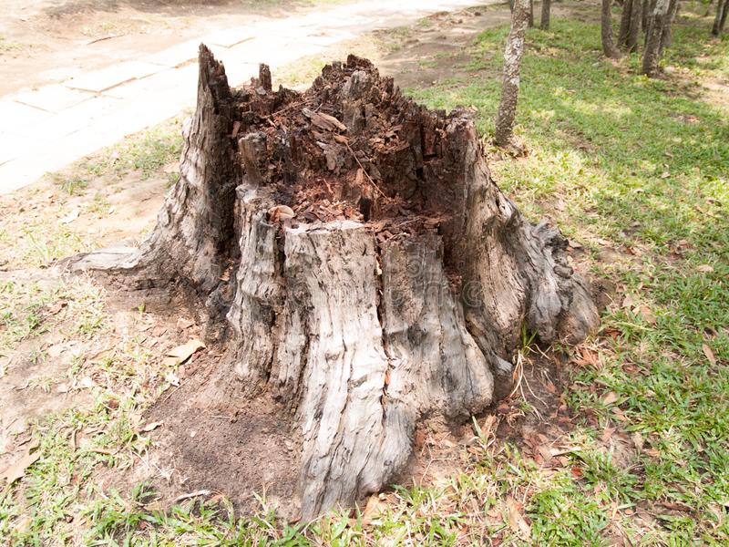 Textuur van boomstomp voor achtergrondafbeeldingen stock foto