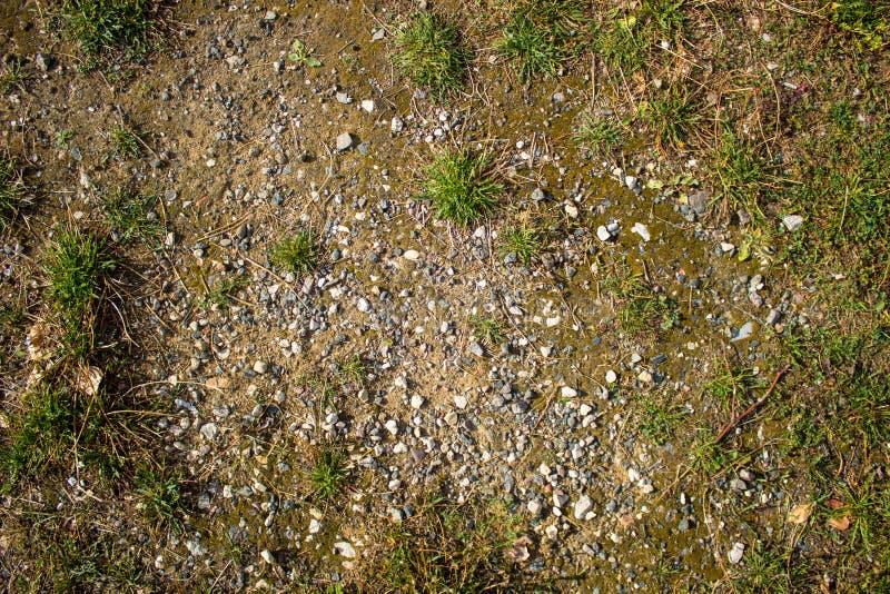 Textuur van de aarde met gras, keien, stenen berglandschap, steppe, bos-steppe stock fotografie