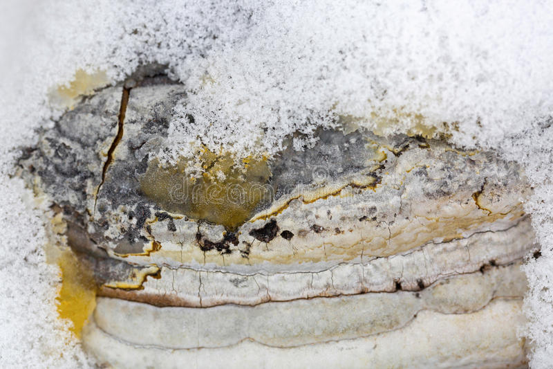Textuur van de bosrijke paddestoel van de paddestoellicht ontvlambare stof met coverin van sneeuwvlokken royalty-vrije stock fotografie
