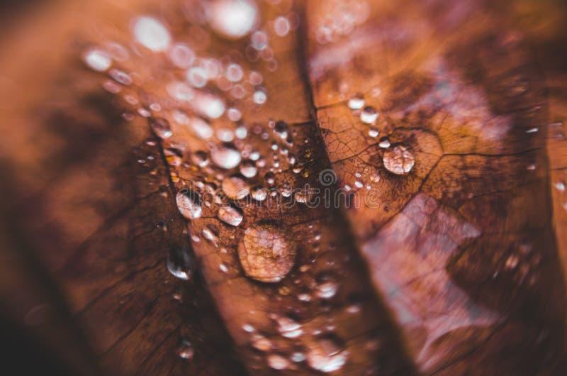 Textuur van de herfstbladeren met dalingen van de achtergrond van de wateraard stock afbeeldingen