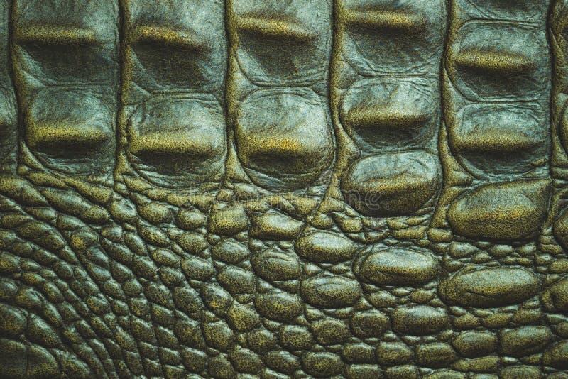 Textuur van de huid van het Krokodilleer stock foto