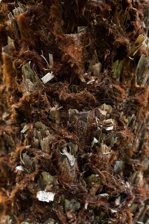 Textuur van de macro van de palmschors Achtergrond van de palm de grote boomstam gedetailleerde structuur en textuur van schors V royalty-vrije stock afbeeldingen
