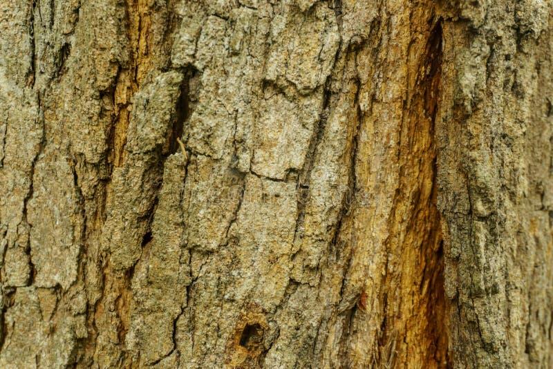 Textuur van de schors de oude boomstam van oude boom stock foto
