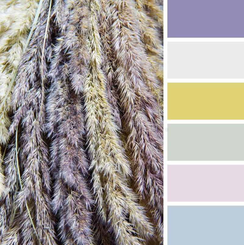 Textuur van droog gras, de monsters van het kleurenpalet. royalty-vrije stock fotografie