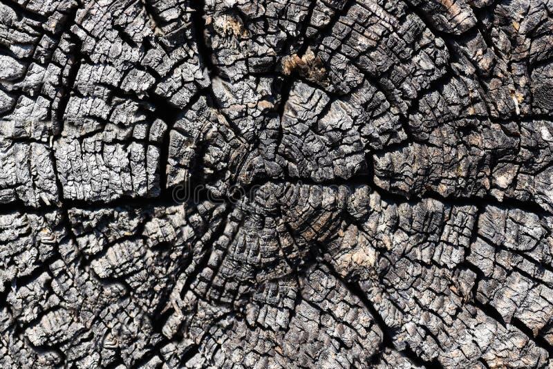 Textuur van een besnoeiing van een droog close-up van de boomboomstam stock foto's