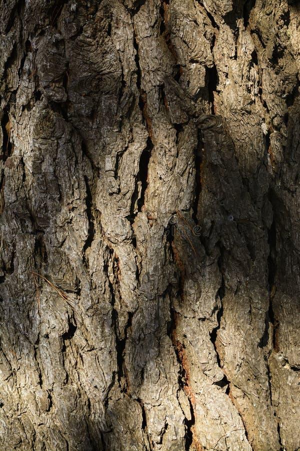 Textuur van een boomboomstam royalty-vrije stock fotografie