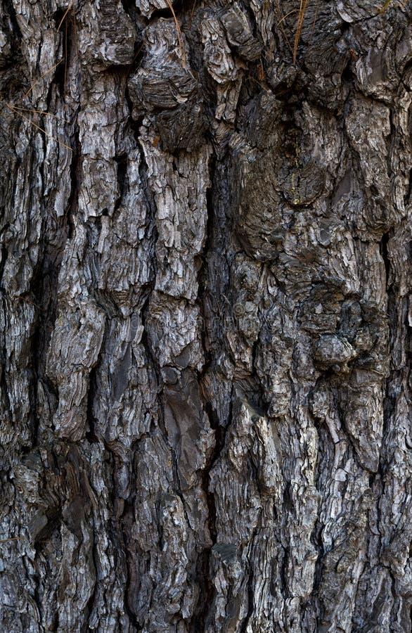 Textuur van een boomboomstam stock foto's