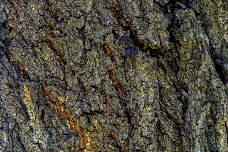 Textuur van een schors van de abrikozenboom royalty-vrije stock afbeelding