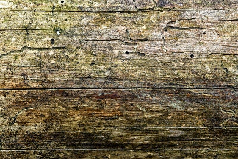 Textuur van een stevige die boomboomstam, met mos wordt behandeld royalty-vrije stock afbeelding