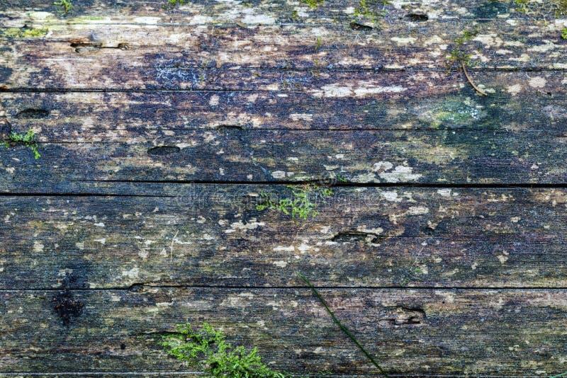 Textuur van een stevige die boomboomstam, met mos wordt behandeld Unpainted textuur Foto met groot scherm stock afbeeldingen