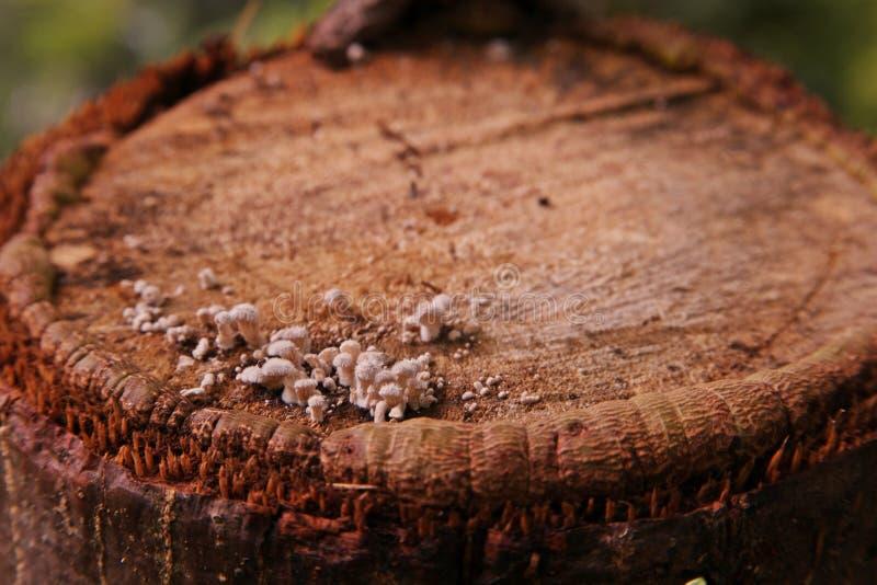 Textuur van eeuwigdurende boom wanneer besnoeiing als dwarsdoorsnede royalty-vrije stock foto