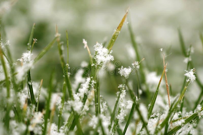 Textuur van gras met sneeuw stock afbeeldingen