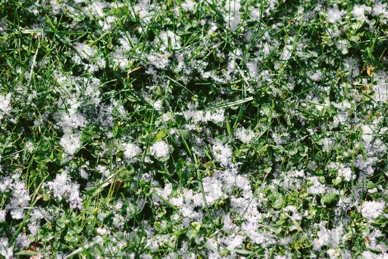 Textuur van gras met sneeuw wordt behandeld die stock fotografie