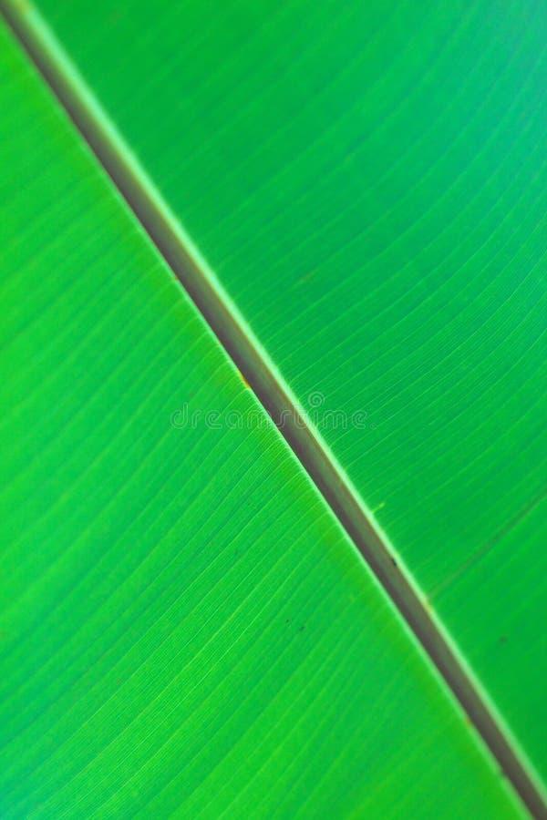 Textuur van groen blad stock foto