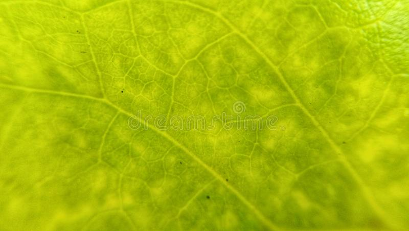 Textuur van groen bladclose-up natuurlijke achtergrond, bladvezels stock foto's
