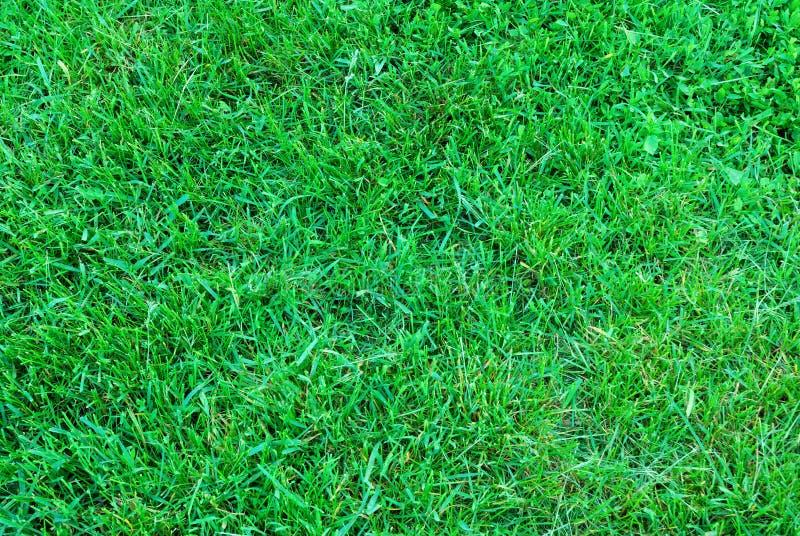 Textuur van het de lente de groene gras stock fotografie