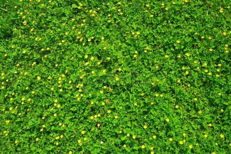 Textuur van het de lente de groene gras met bloemen royalty-vrije stock afbeeldingen