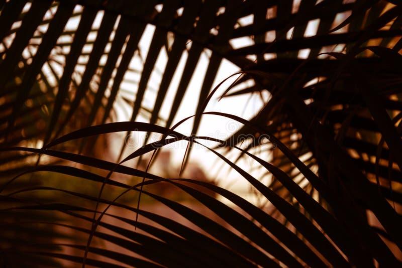 Textuur van het het landschapsverlof blad van de achtergrond de tropische patroonpalm bij stock afbeelding