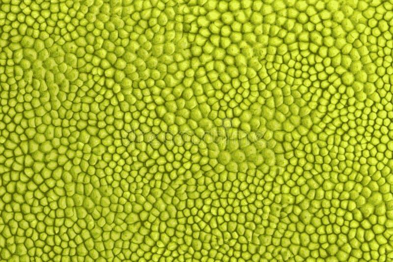 Textuur van jackfruit tropisch fruit in Azië royalty-vrije stock afbeelding