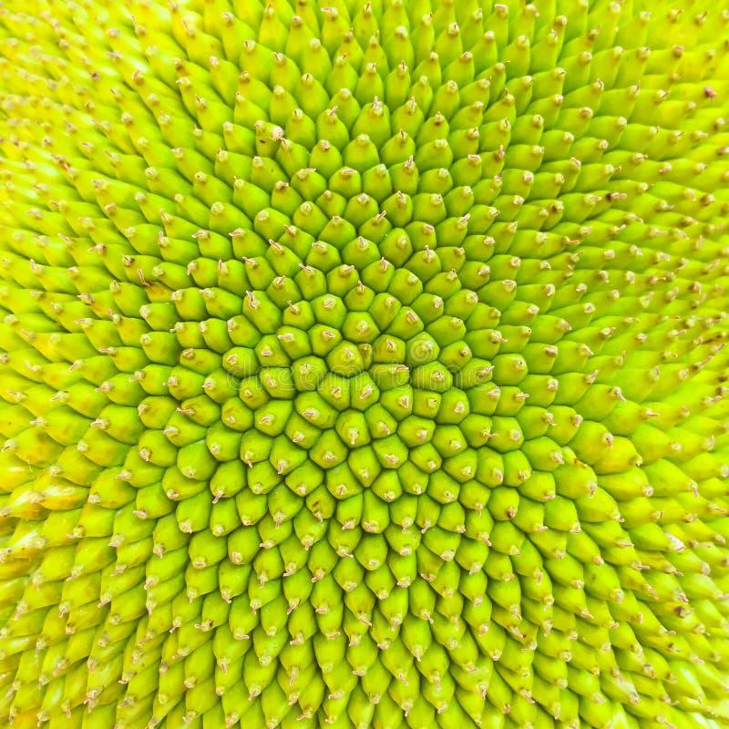 Textuur van jackfruit Zijn oppervlakte kijkt als een kleine doorn welke groene en gele kleur is stock afbeeldingen