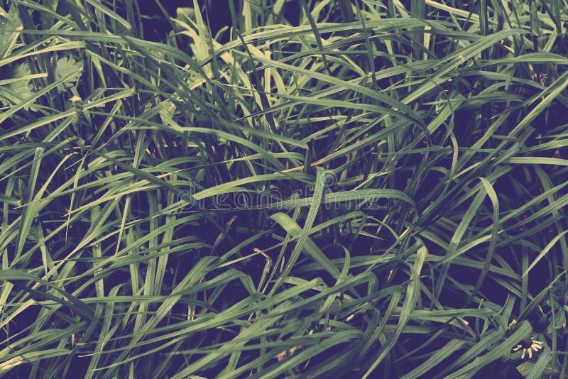 Textuur van jong gras op Parkachtergrond stock foto's