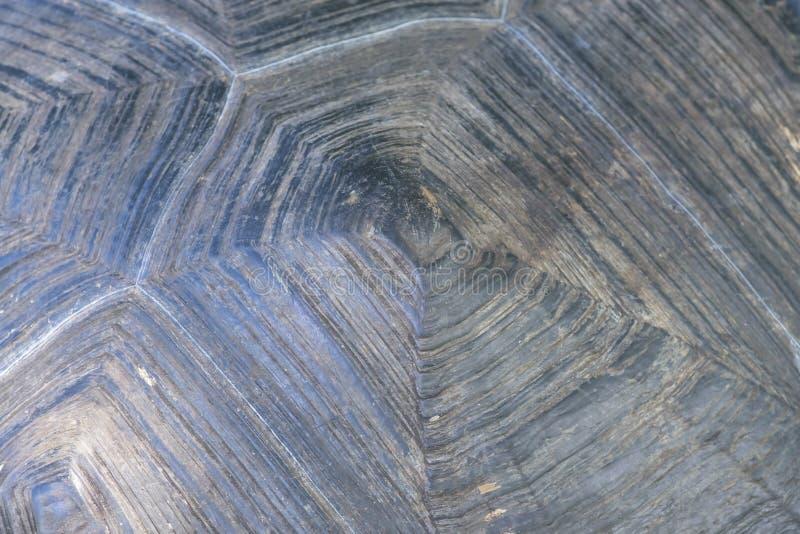 Textuur van Live Tortoise Shell royalty-vrije stock foto