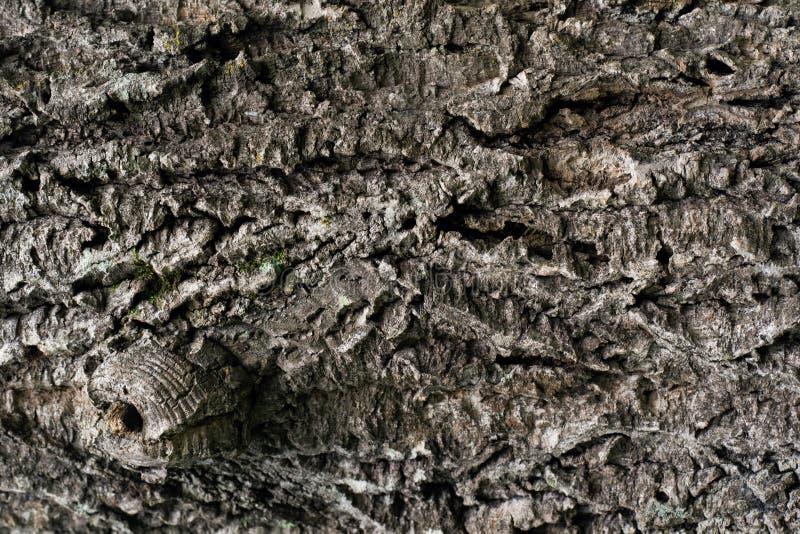 Textuur van natuurlijke houten schors in dichte omhooggaand royalty-vrije stock afbeeldingen