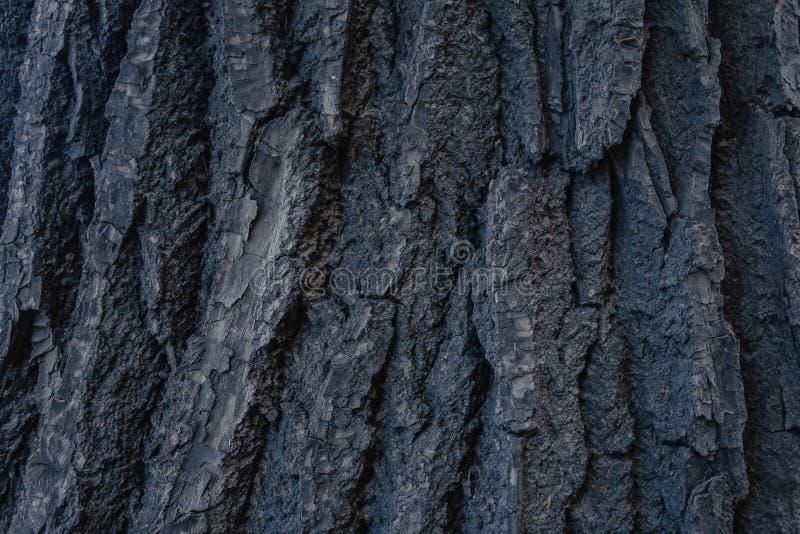 Textuur van oude boomschors abstracte foto van houten boomschors stock foto