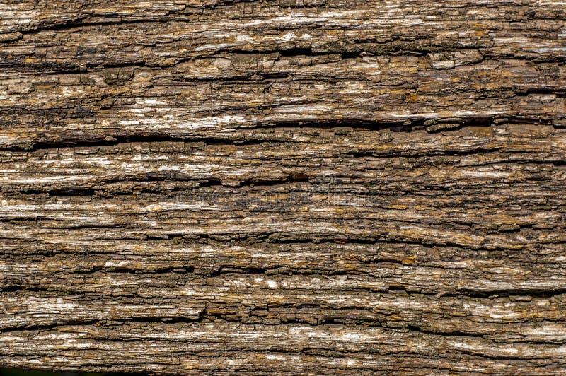 Textuur van oude eiken boomschors royalty-vrije stock foto's