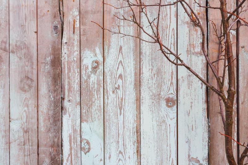 Textuur van oude grijze raad en takken royalty-vrije stock afbeeldingen