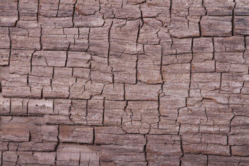 Textuur van oude pijnboomkinaboom royalty-vrije stock foto's