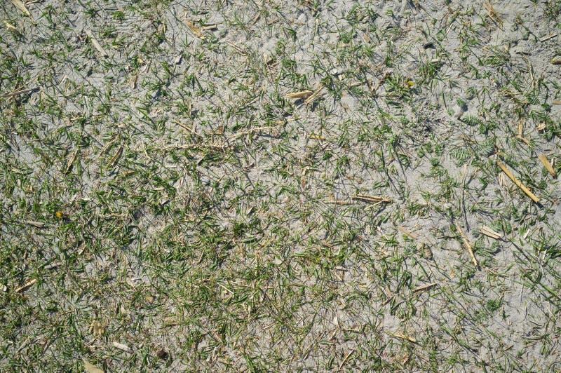 Textuur van Sandy Lake Shore met Gras royalty-vrije stock fotografie