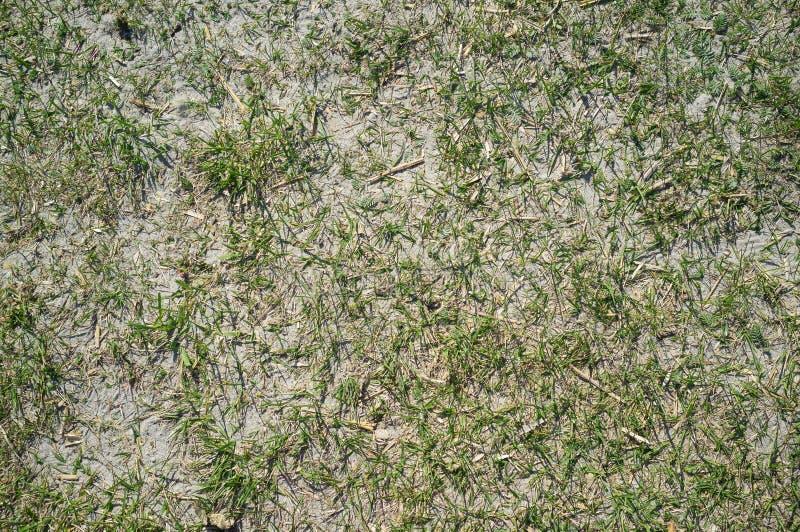Textuur van Sandy Lake Shore met Gras stock foto's