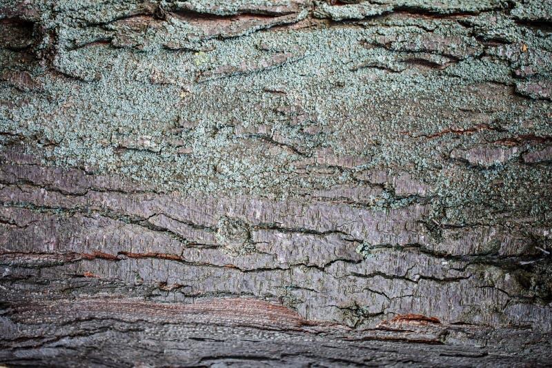 Textuur van schors van een boom, Abstracte achtergrond stock fotografie