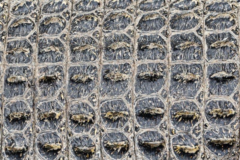 Textuurachtergrond van Krokodil krokodillehuid stock fotografie