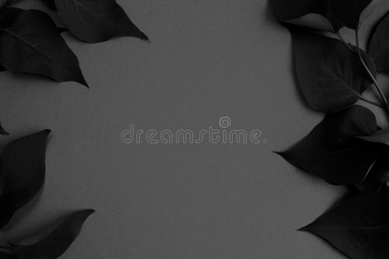 Textuurkader van bladeren donkergrijze foto royalty-vrije stock foto
