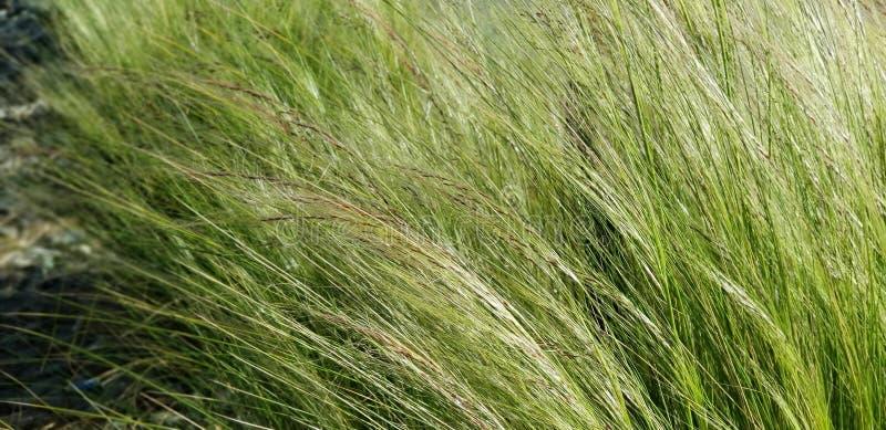 Textuurreeks - Groene Grassen in de Wind stock foto's