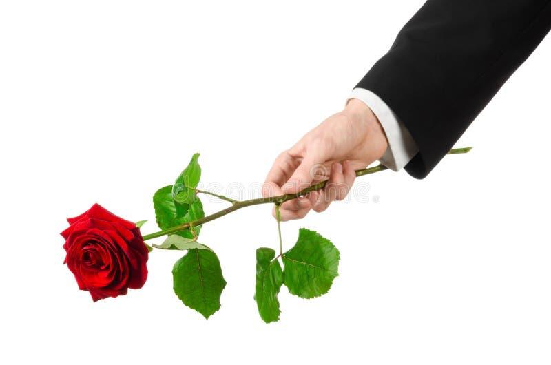 Thème de Saint-Valentin et de jour des femmes : la main de l'homme dans un costume jugeant une rose rouge d'isolement sur le fond photographie stock libre de droits