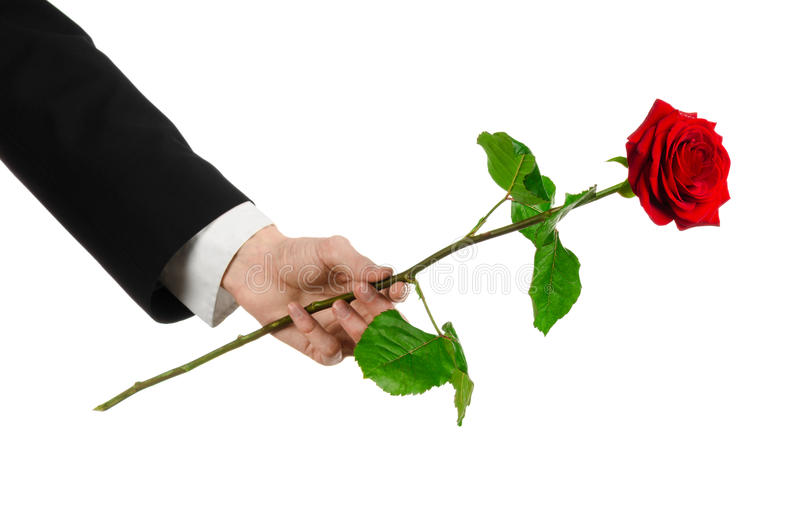 Thème de Saint-Valentin et de jour des femmes : la main de l'homme dans un costume jugeant une rose rouge d'isolement sur le fond images stock