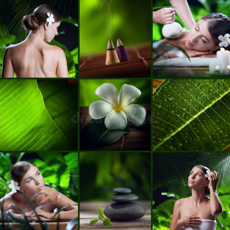 thème de station thermale de frangipani de fleur de cuvette photo stock