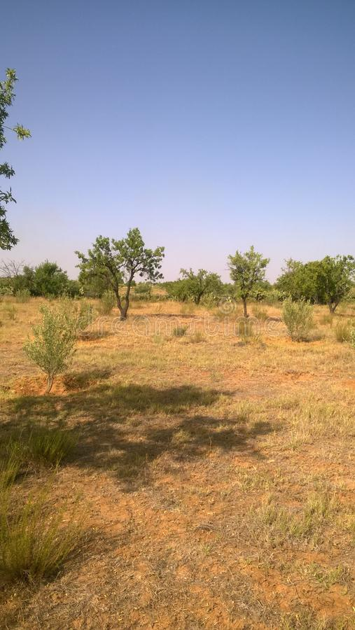 Trees in field captured in a hot summer day royalty free stock image