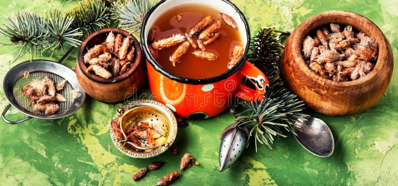 Thé avec des bourgeons de pin photos stock