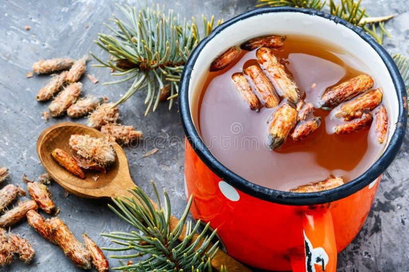 Thé avec des bourgeons de pin photo stock