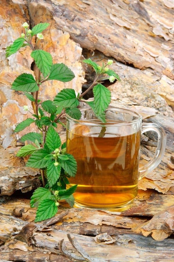 Thé avec l'herbe douce aztèque photographie stock